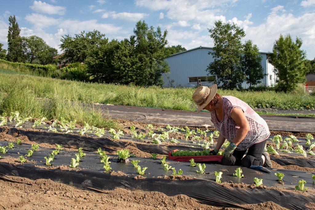 Cafés métiers de l'agriculture